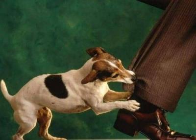 Eigenaar verantwoordelijk voor gedrag hond (foto: PoliceLocaleBE)